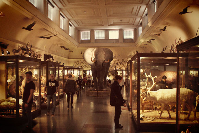 Elephant at the natural history museum in Gothenburg