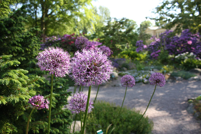 The botanical gardens in Lund are free to visit