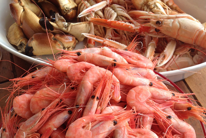 Crayfish and prawns on the west coast of Sweden