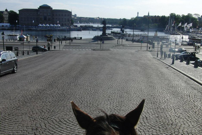 Horse riding in Stockholm