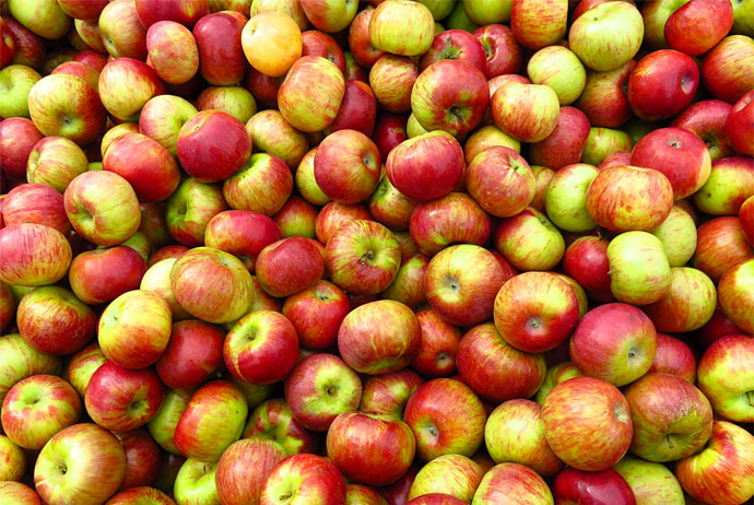 There are apples galore at beltoft Festival in Denmark