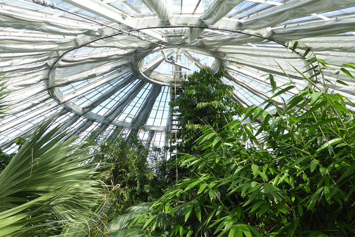 The palm house in Copenhagen is a great place to warm up in winter