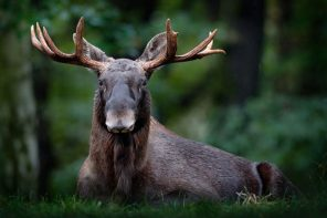 Wildlife tours in Sweden