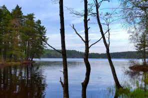 Guided nature hike from Stockholm