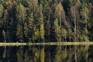 Sipoonkorpi National Park Half-Day Hike from Helsinki